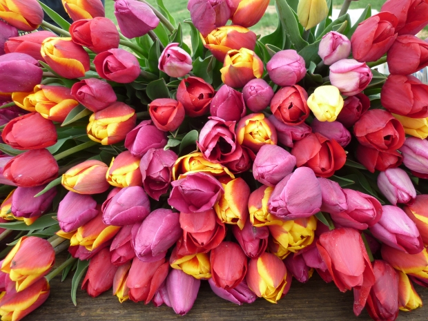 2011 Captured by EcoTulips.JPG